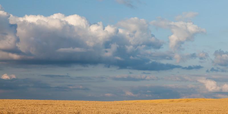 Wheat field outside Yorkville, IL<br /> <br /> IL-090720-0038