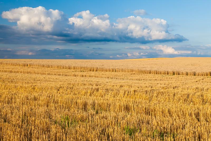 Wheat field outside Yorkville, IL<br /> <br /> IL-090720-0024
