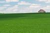 Soybean field in Ogle County. Polo, IL<br /> <br /> IL-070713-0006