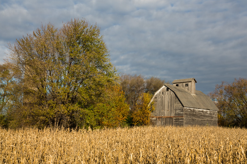 Corn waiting to be harvested stands on a farm on the outskirts of DuPage County. Aurora, IL<br /> <br /> IL-121031-0036