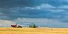 Wheat field outside Yorkville, IL<br /> <br /> IL-090720-0030