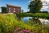 Mill Wildflowers