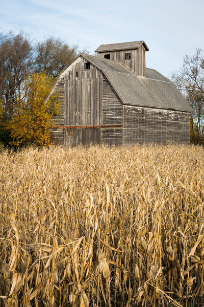 Corn waiting to be harvested stands on a farm on the outskirts of DuPage County. Aurora, IL<br /> <br /> IL-121031-0016