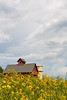 Storm clouds over Peck's Farm barn. Geneva, IL<br /> <br /> IL-180903-0040