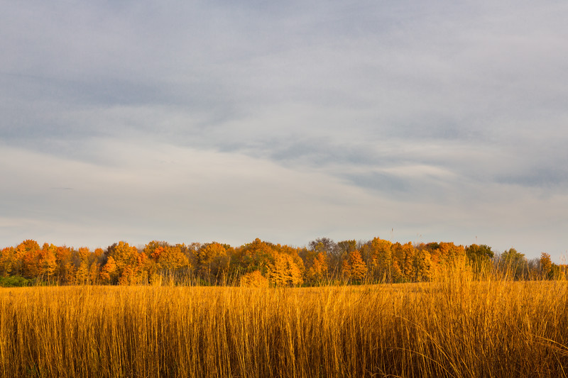 Prairie Autumn