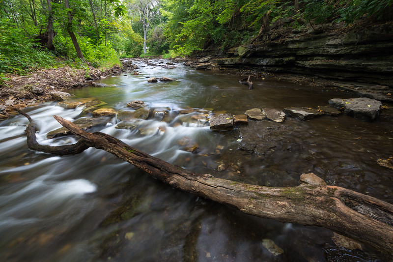 A fallen tree rests on the bed of Waubonsie Creek. Oswego, IL<br /> <br /> IL-180816-0025