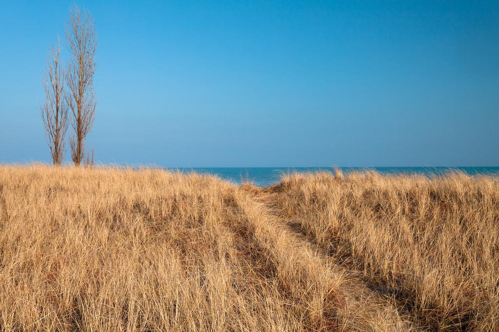 Grasses line a trail near the shoreline at Illinois Beach. Zion, IL<br /> <br /> IL-090208-0099