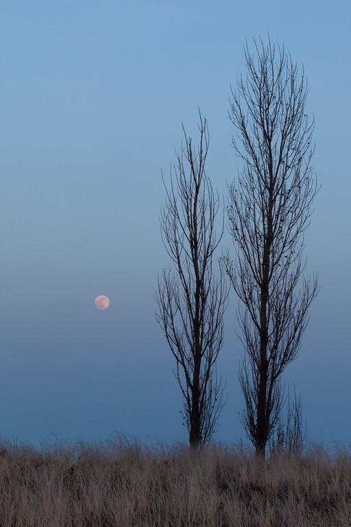 February moonrise at Illinois Beach. Zion, IL<br /> <br /> IL-092008-0129