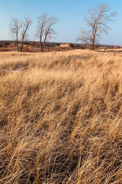 Grasses and trees at Illinois Beach. Zion, IL<br /> <br /> IL-00108-0109