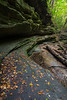 The first signs of autumn can be seen lying along a canyon wall in Matthiessen State Park. Lasalle County, IL<br /> <br /> IL-160925-0044