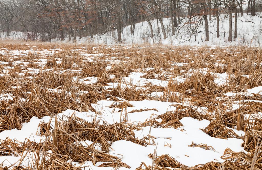 Pike Marsh Winter Scene