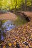 Armstrong Creek Autumn