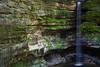 Limestone Ferns II