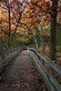Fall color can be seen aound the boardwalk leading into the canyons at Starved Rock. Lasalle County, IL<br /> <br /> IL-131102-0163