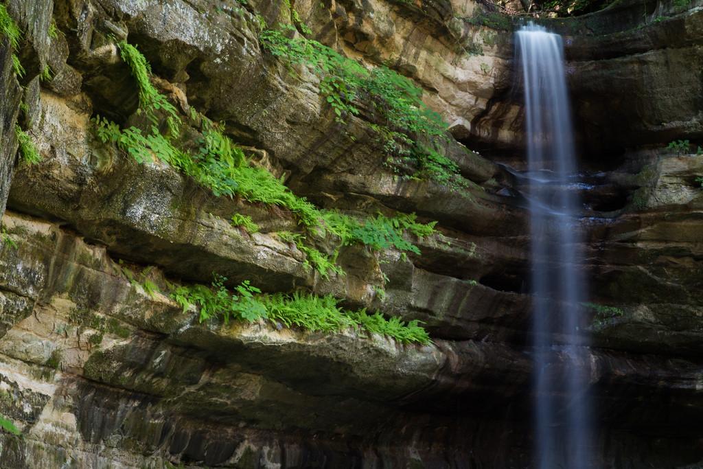 Limestone Ferns I