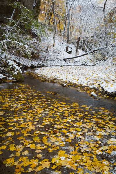 Snow and golden maple leafs cover the ground in Ottawa Canyon. Lasalle County, IL<br /> <br /> IL-191101-0059