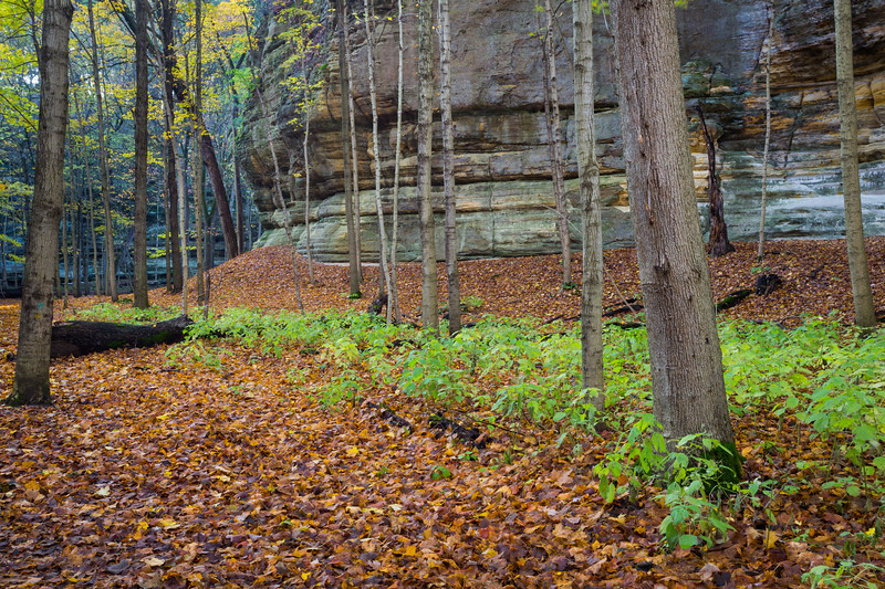 Lasalle Canyon Leafs