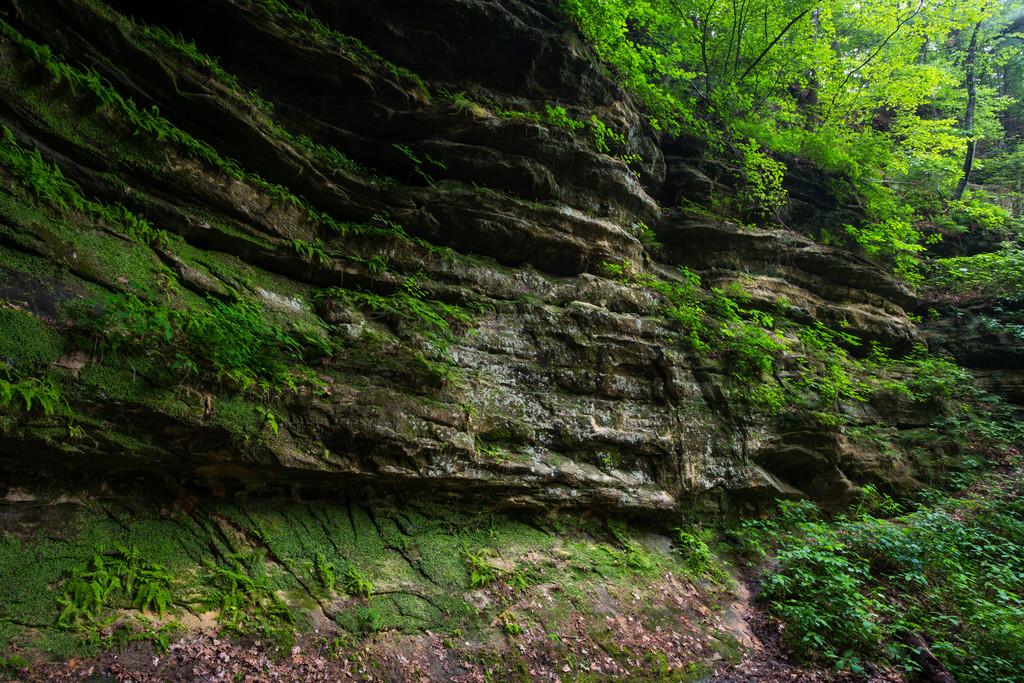 Aurora Canyon wall. Lasalle County, IL<br /> <br /> IL-160604-0184