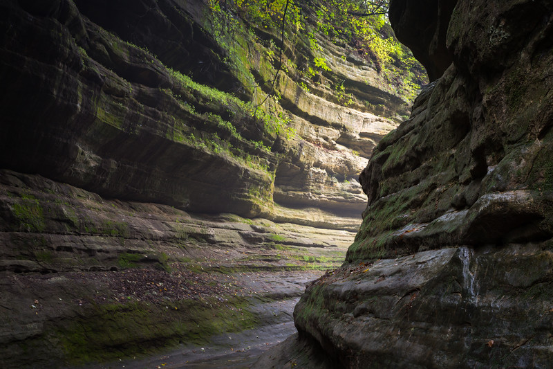 Difused light enters French Canyon on a early fall foggy morning. Lasalle County, IL<br /> <br /> IL-190930-0030