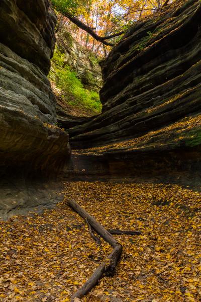 Aurora Canyon Autumn I