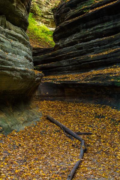 Aurora Canyon Autumn II