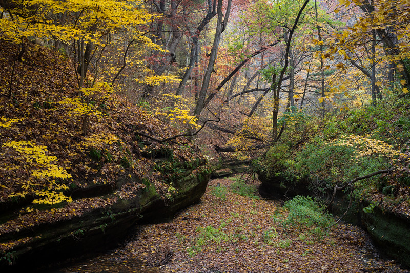 Autumn Color in Lasalle Canyon