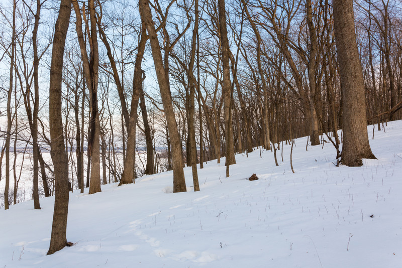 Starved Rock Bluff Woods
