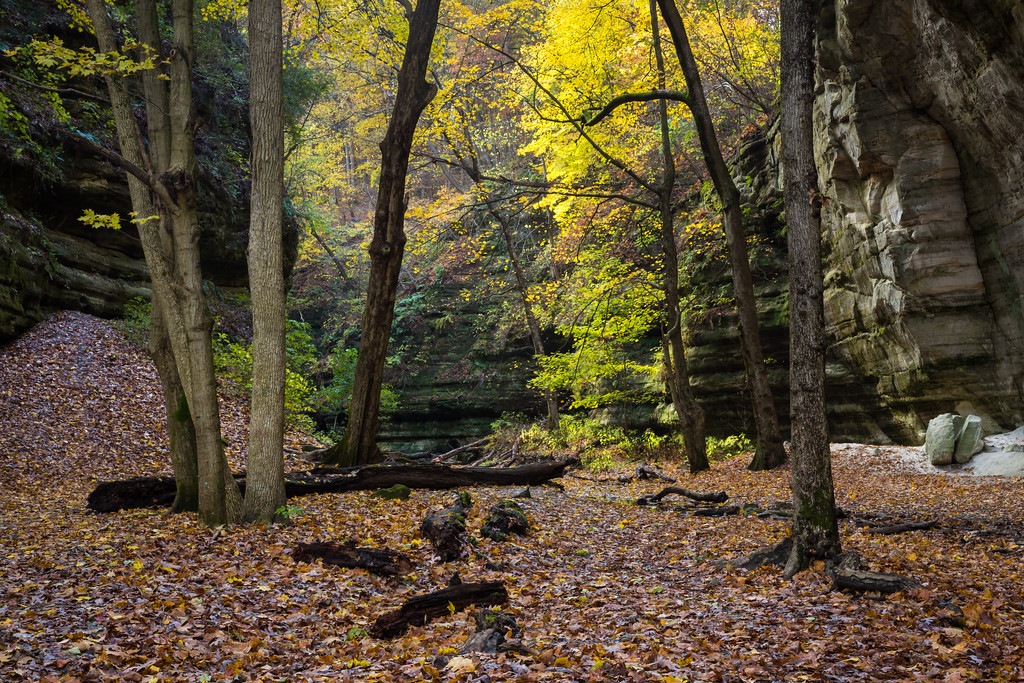Although most leafs have dropped, there is plenty of color to be found at the end of Kaskaskia Canyon. Lasalle County, IL<br /> <br /> IL-171103-0107