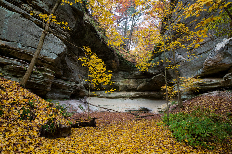 A carpet of leafs covers the ground of one of the canyons in Starved Rock. Lasalle County, IL<br /> <br /> IL-121020-0040