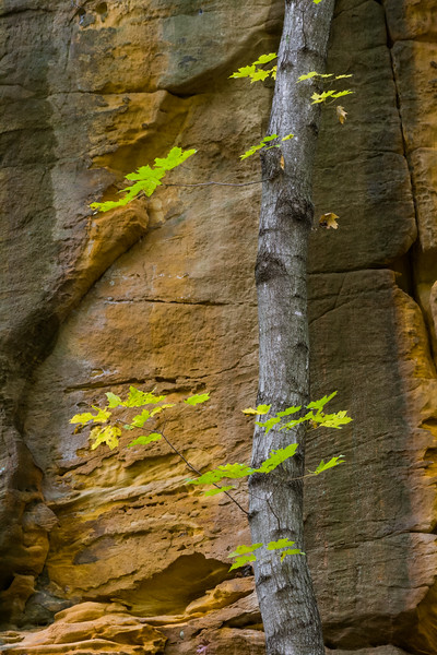 The brigh color maple leafs contrast against the canyon walls. Lasalle County, IL<br /> <br /> IL-061017-0061