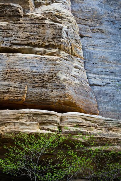 Tonti Limestone and Tree
