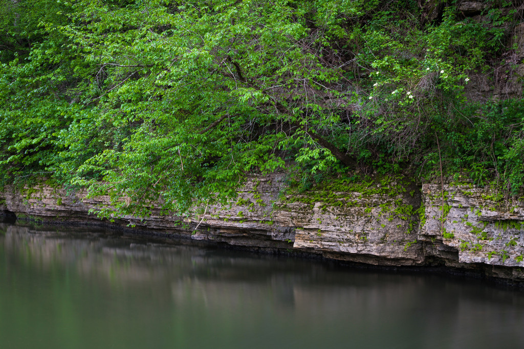 Spring green foliage grows over the dolomite rock formations along Pine Creek. Mt. Morris, IL<br /> <br /> IL-140425-0031