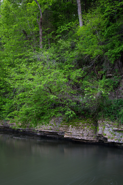 Spring green foliage grows over the dolomite rock formations along Pine Creek. Mt. Morris, IL<br /> <br /> IL-140425-0037
