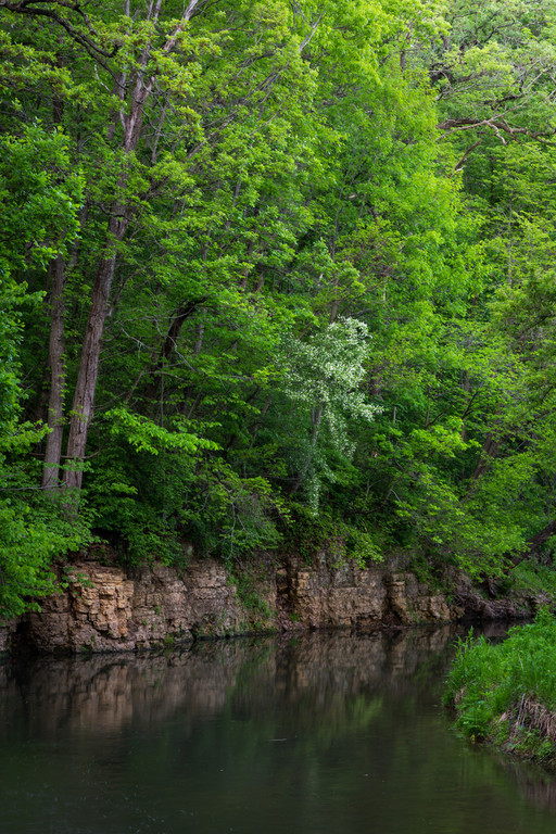 Spring green foliage grows over the dolomite rock formations along Pine Creek. Mt. Morris, IL<br /> <br /> IL-140425-0019