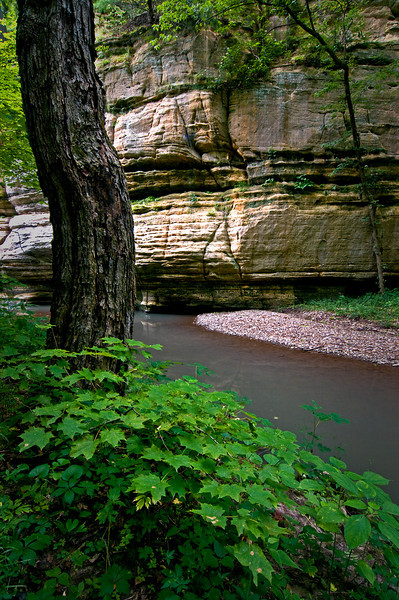 SR 008                          Summer in Illinois Canyon at Starved Rock State Park, Utica, Illinois.