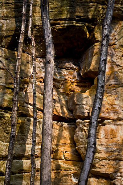 SR 011                        Tree trunks against the sandstone walls of Illinois Canyon at Starved Rock State Park, Utica, Illinois.