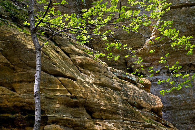SR 053                         The St. Peter sandstone walls in Illinois Canyon at Starved Rock State Park, Utica, Illinois.