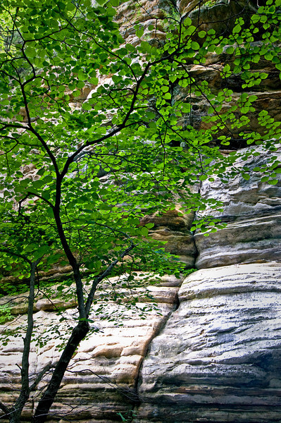 SR 022                        Summer in Illinois Canyon at Starved Rock State Park, Utica, Illinois.