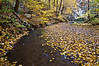 SR 040                           Fallen leaves in the stream flowing through Ottawa Canyon at Starved Rock State Park, Utica, Illinois.