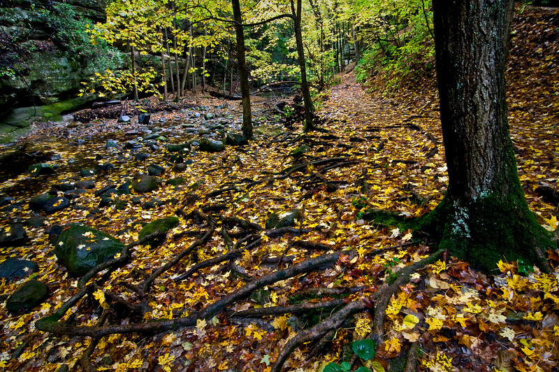 SR 039                           Fallen leaves cover tree roots in the canyons of Matthiessen State Park, Utica, Illinois.