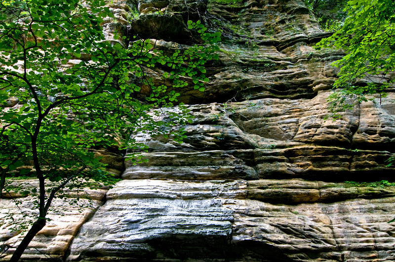 SR 024                        Summer in Illinois Canyon at Starved Rock State Park, Utica, Illinois.