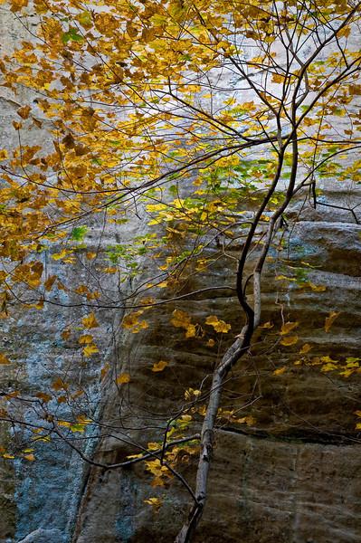SR 076                          Autumn in Illinois Canyon, Starved Rock State Park, Utica, Illinois.
