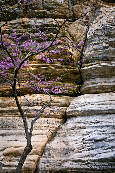 SR 064                        Spring in Illinois Canyon, Starved Rock State Park, Utica, Illinois.