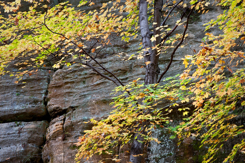 SR 083                        Maples in fall color against the sandstone walls of Tonty Canyon at Starved Rock State Park, Utica, Illinois.