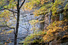 SR 085                        Maples in fall color against the sandstone walls of Tonty Canyon at Starved Rock State Park, Utica, Illinois.