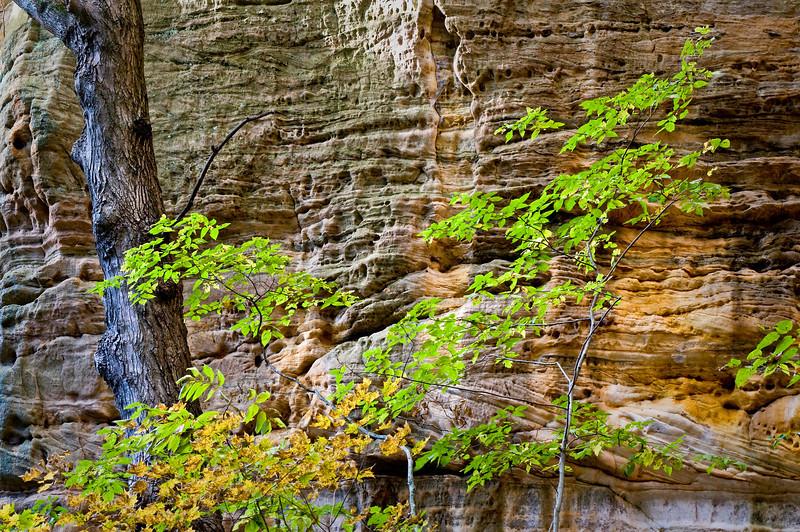 SR 077                        Autumn in Ottawa Canyon, Starved Rock State Park, Utica, Illinois.