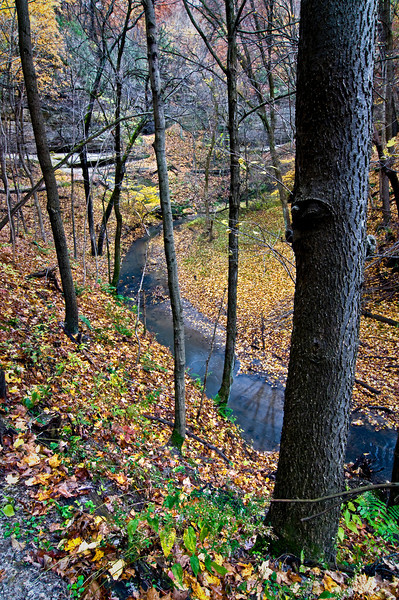 SR 003                      Trees line the creek leading into LaSalle Canyon at Starved Rock State Park, Utica, Illinois.