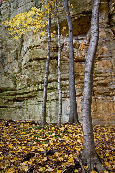 SR 033                       Autumn in Illinois Canyon at Starved Rock State Park, Utica, Illinois.