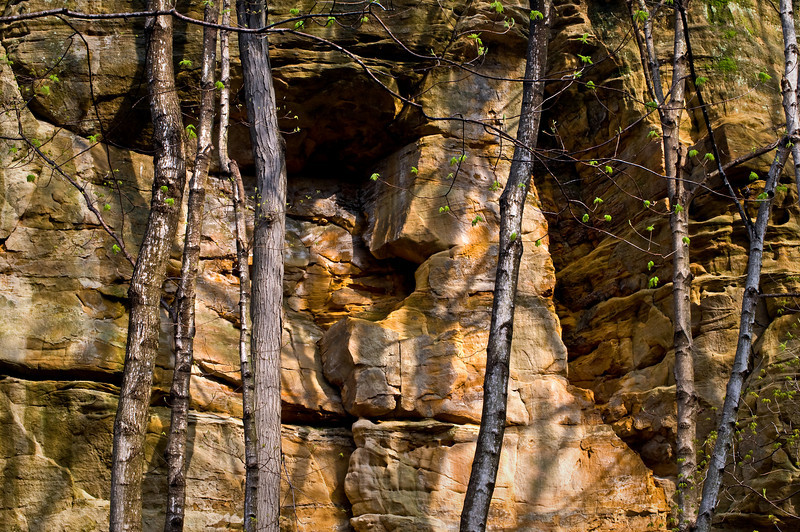 SR 013                      Tree trunks against the sandstone walls of Illinois Canyon at Starved Rock State Park, Utica, Illinois.