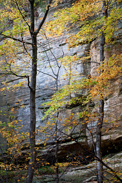 SR 084                          Maples in fall color against the sandstone walls of Tonty Canyon at Starved Rock State Park, Utica, Illinois.